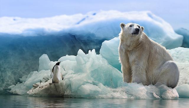 北極にいないペンギンと南極にいないホッキョククマ