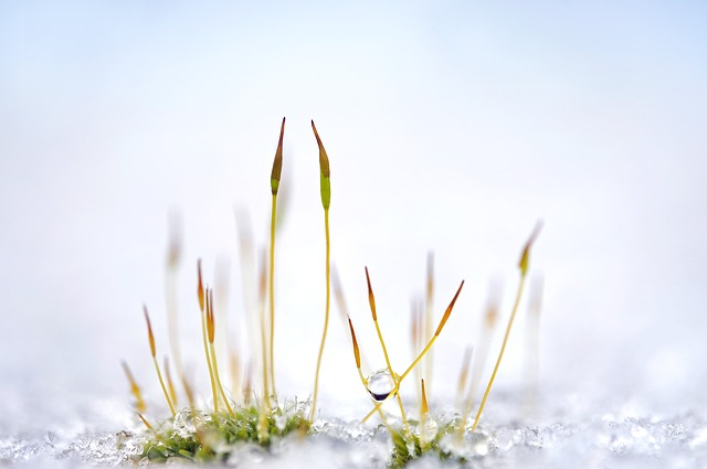 about-antarctic-and-arcticplants01