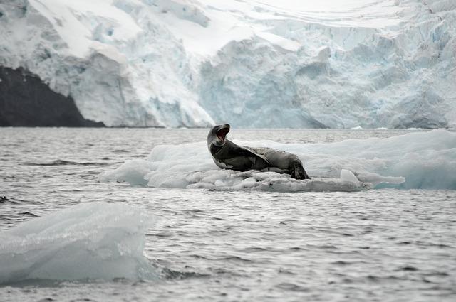 生態系におけるアイスアルジーの役割